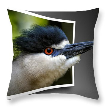 Black Crowned Night Heron Out Of Bounds Throw Pillow