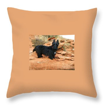 Black Dog Red Rock Throw Pillow