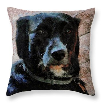 Black Dog Worry Highlights Throw Pillow