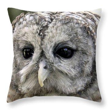 Black Eye Owl Throw Pillow