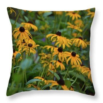 Black-eyed Susan Throw Pillow