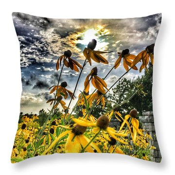 Black Eyed Susan Throw Pillow by Sumoflam Photography