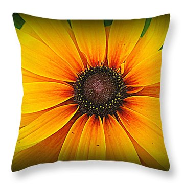 'black Eyed Susan' Throw Pillow