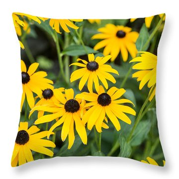 Black-eyed Susan Up Close Throw Pillow