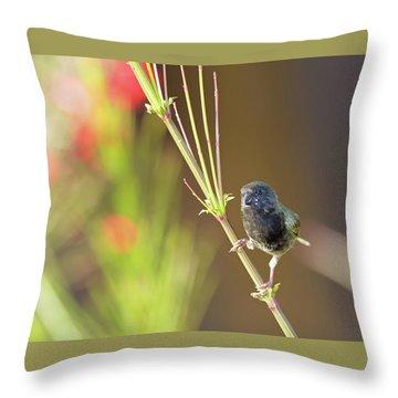 Black-faced Grassquit Throw Pillow