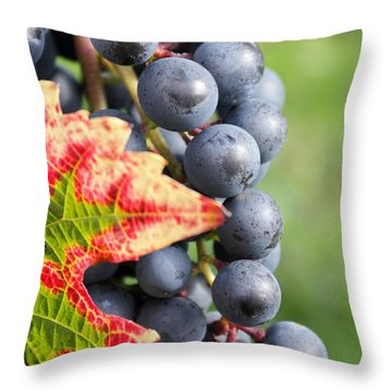 Black Grapes On The Vine Throw Pillow