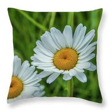 Black-headed Daisy's Throw Pillow
