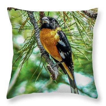 Black-headed Grosbeak On Pine Tree Throw Pillow