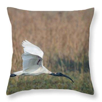 Black-headed Ibis 01 Throw Pillow
