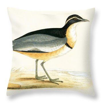 Black Headed Plover Throw Pillow by English School