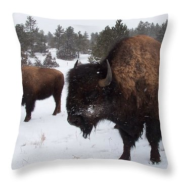 Black Hills Bison Throw Pillow