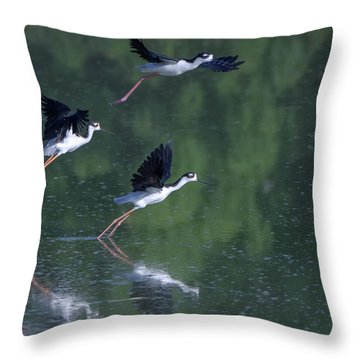 Black-necked Stilts 4302-080917-2cr Throw Pillow