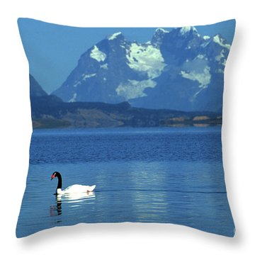 Black Necked Swan On Last Hope Sound Chile Throw Pillow