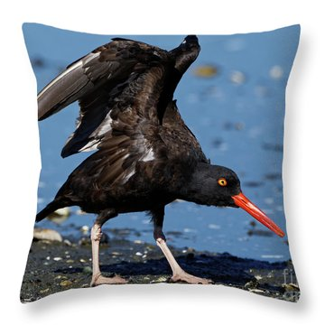 Black Oyster Catcher Throw Pillow