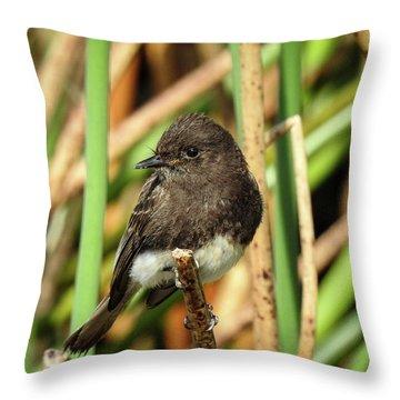 Black Phoebe Close Up Throw Pillow
