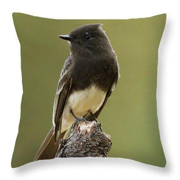 Black Phoebe Throw Pillow by Doug Herr