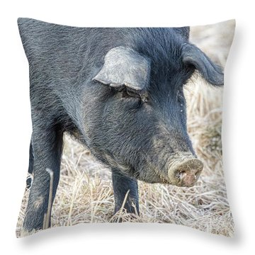 Throw Pillow featuring the photograph Black Pig Close-up by James BO Insogna