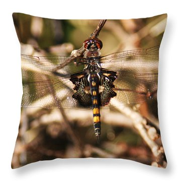 Throw Pillow featuring the photograph Black Saddlebags Dragonfly by William Selander