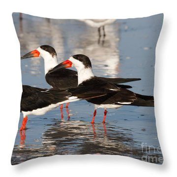 Black Skimmer Birds Throw Pillow