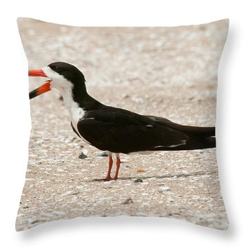 Black Skimmer On Assateague Island Throw Pillow by Lara Ellis