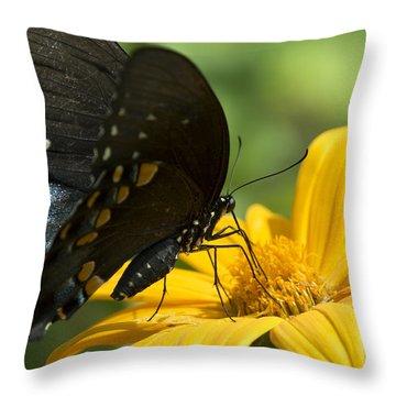 Black Swallowtail Drinking Throw Pillow