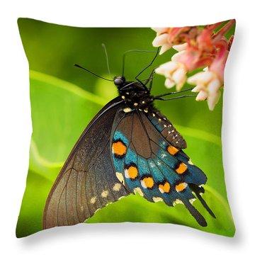 Black Swallowtail #1 Throw Pillow