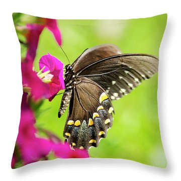 Throw Pillow featuring the photograph Black Swallowtail Butterfly by Christina Rollo