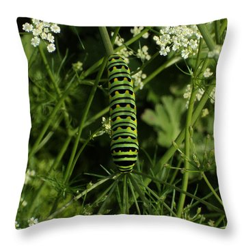 Throw Pillow featuring the painting Black Swallowtail Butteryfly Caterpillar by Chholing Taha