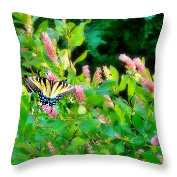 Throw Pillow featuring the photograph Black Swallowtail by EDi by Darlene