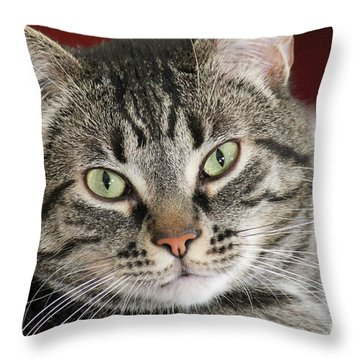 Black Tabby Throw Pillow