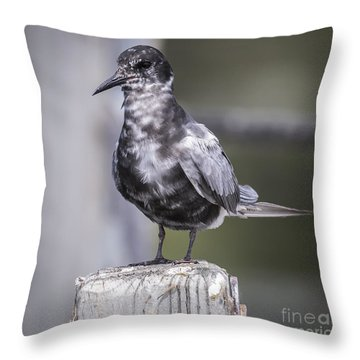 Throw Pillow featuring the photograph Black Tern  by Ricky L Jones