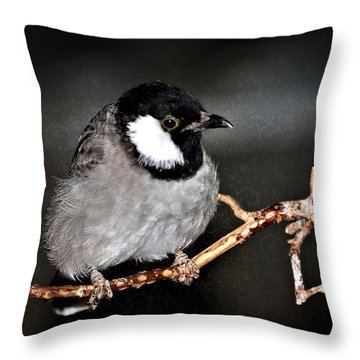 Black Throated Laughing  Thrush Throw Pillow by Elaine Manley