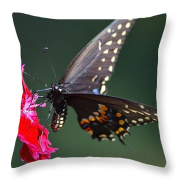 Black Tiger Swallowtail Throw Pillow