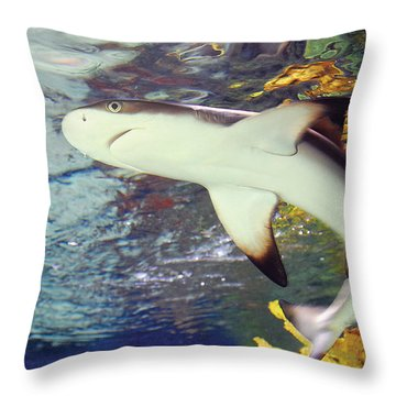 Black Tipped Reef Shark-1 Throw Pillow
