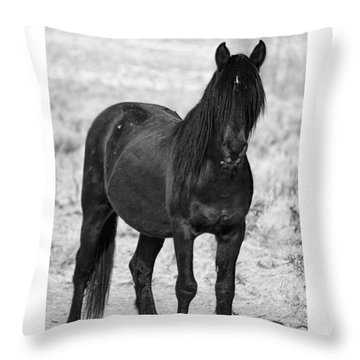 Black Wild Mustang Stallion Throw Pillow