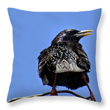 Blackbird Throw Pillow by Mikki Cucuzzo