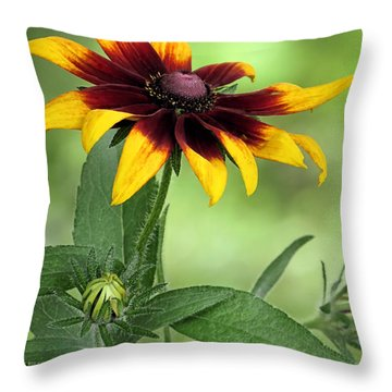 Blanket Flower  Throw Pillow by Janice Drew