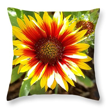 Blanketflower Throw Pillow