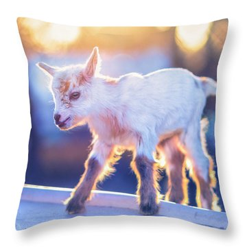 Little Baby Goat Sunset Throw Pillow by TC Morgan