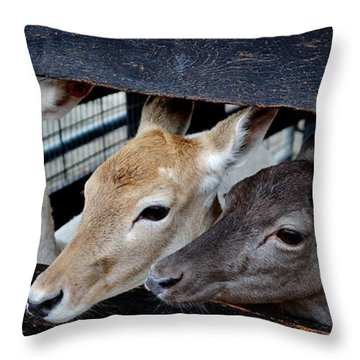 Blonde Redhead Brunette Throw Pillow