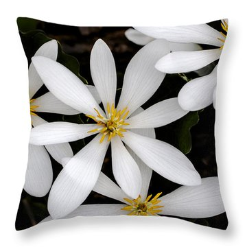 Sanguinaria Throw Pillow