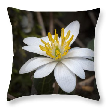 Throw Pillow featuring the photograph Bloodroot by Tyson and Kathy Smith