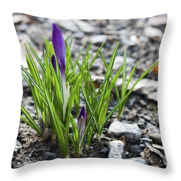 Throw Pillow featuring the photograph Bloom Awaits by Jeff Severson