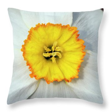 Bloom Of Narcissus Throw Pillow by Michal Boubin