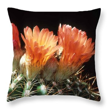 Bloomin' Barrel Throw Pillow by Laurie Paci