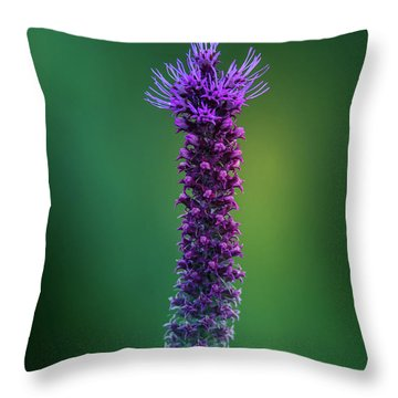Blooming Blazing Star Throw Pillow