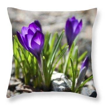 Throw Pillow featuring the photograph Blooming Crocus #1 by Jeff Severson