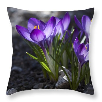 Throw Pillow featuring the photograph Blooming Crocus #2 by Jeff Severson