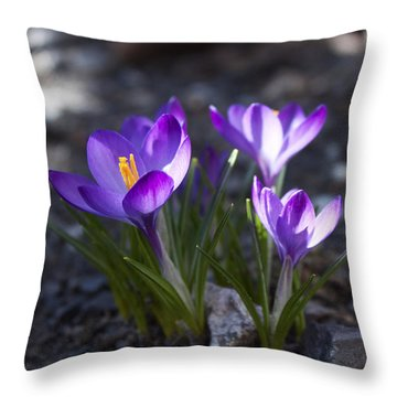 Throw Pillow featuring the photograph Blooming Crocus #3 by Jeff Severson