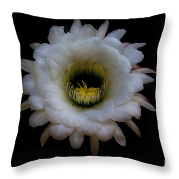 Blooming Echinopsis Candicans Throw Pillow